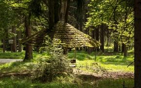Обои Германия, деревья, Waldershof, указатель, дорожка, тропинка, Бавария, навес, лес
