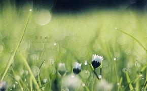 Картинка трава, макро, цветы, роса, блики, утро, боке