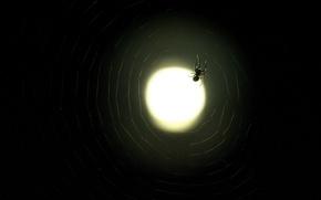 Обои Луна, паутина, паук