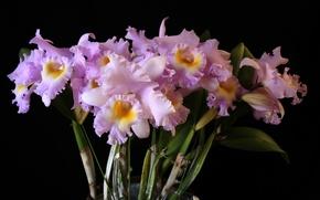 Картинка Букет, черный фон, орхидеи