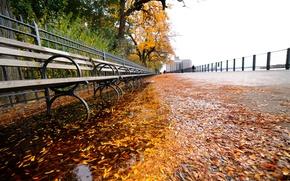 Обои nyc, нью-йорк, New York, листья