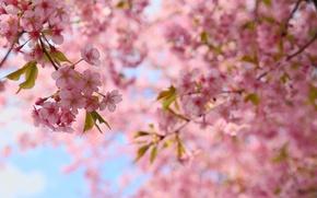 Обои весна, цветение, ветки, листья, цветы