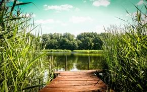 Картинка green, summer, lake, warm