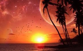 Картинка sea, sunset, palm trees