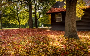 Обои nature, house, bench, forest, park, trees, leaves, colorful, autumn