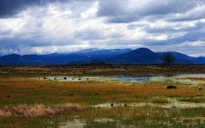 Картинка трава, горы, болото