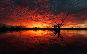 Картинка небо, облака, деревья, закат, озеро, коряга