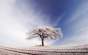 Обои иней, поле, небо, облака, дерево