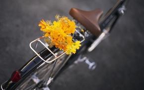 Картинка цветы, велосипед, букет, bike, flowers, bouquet