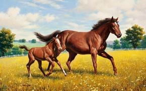Обои лошадь, луг, живопись, Arthur Saron Sarnoff, жеребёнок