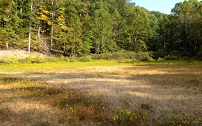Картинка лес, трава, деревья, поляна, США, Indiana State Park