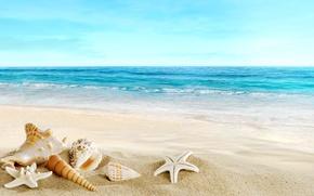 Обои песок, море, пляж, ракушки, beach, sand, seashells