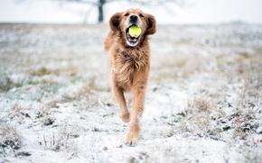 Картинка снег, игра, собака