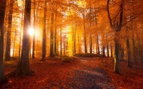 Картинка дорога, осень, лес, листья, солнце, свет, деревья