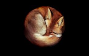 Картинка Лис, фон, рисунок, рыжий, лежит