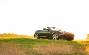 Обои свет, grass, Jaguar, V8 S, car, green, Convertible, авто, light, трава, F-type