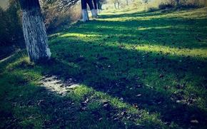 Картинка трава, деревья, природа
