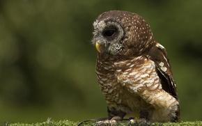 Картинка сова, птица, мох, профиль