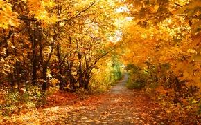 Картинка осень, листья, дорожка