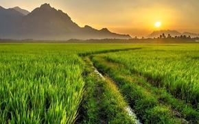 Картинка дорога, поле, солнце, горы