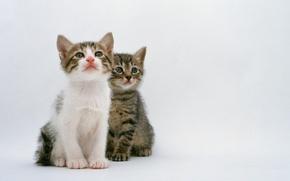 Картинка кошка, кот, котенок, двое, cat