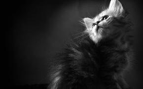 Картинка кошки, котенок, обои