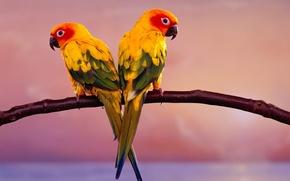 Картинка птицы, ветка, попугаи