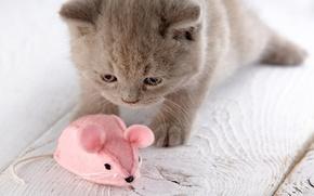 Картинка игрушка, мышь, мышка, котёнок