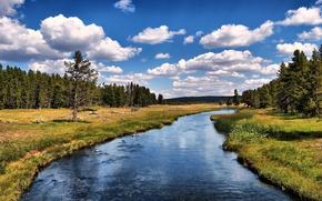 Картинка лес, природа, река, USA, California, Grizzly River Run, Anaheim