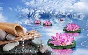 Картинка небо, вода, облака, цветы, камни, бамбук, лотосы
