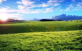 Картинка облака, овцы, Поле