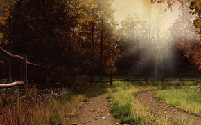 Картинка осень, лес, трава, листья, лучи, тропа, ограда, дымка