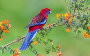 Картинка цветы, ветка, живая природа, попугай, птица