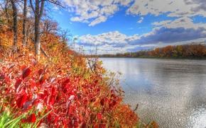 Картинка багрянец, осень, небо, деревья, река, лес, листья