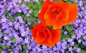 Обои цветы, краски, лепестки, линии