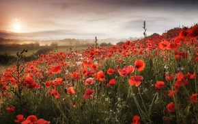 Картинка поле, облака, цветы, холмы, маки, луг