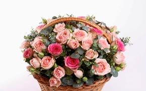 Картинка корзина, розы, букет, Rose, basket, шикарный