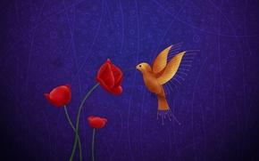 Обои рисунок, маки, колибри