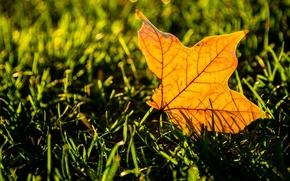 Картинка зелень, трава, листья, макро, желтый, фон, widescreen, обои, листик, wallpaper, листочек, yellow, широкоформатные, background, leaves, ...