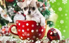 Картинка украшения, снежинки, игрушка, собака, шарик, кружка, щенок, пёсик, Чихуахуа