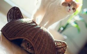 Картинка солнце, кошки, корзина, игра, прячется, Daisy, Ben Torode, Hannah, Benjamin Torode