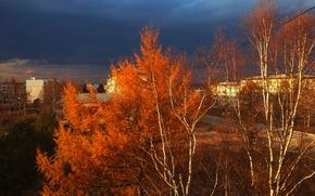 Картинка осень, деревья, темное небо
