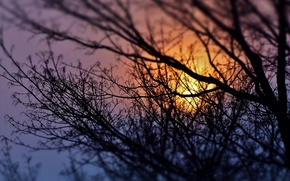 Картинка небо, деревья, закат, природа, силуэт, веточки