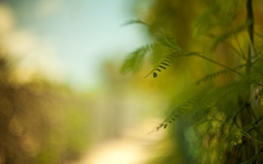 Картинка листья, макро, зеленый, фон, widescreen, обои, растение, размытие, wallpaper, листочки, широкоформатные, листики, background, leaves, полноэкранные, …