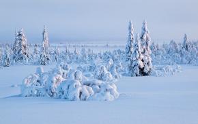 Обои небо, ель, снег, деревья, зима