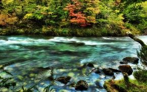 Обои деревья, волны, дикие, Река, камни