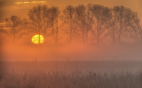 Картинка поле, осень, небо, солнце, деревья, закат