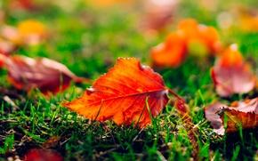 Картинка трава, листья, Осень, размытость