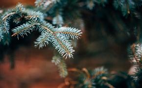 Обои дерево, иголки, ветка, елка