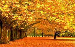Обои листва, парк, листопад, деревья, leaves, лес trees, листья